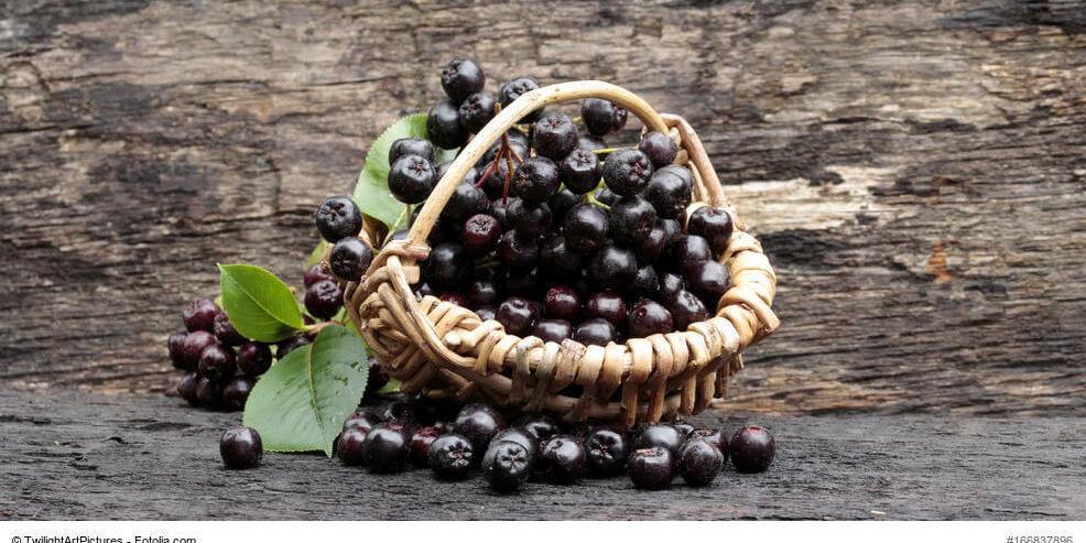 Aronia Super Food De Naturlich Gesunde Naturprodukte
