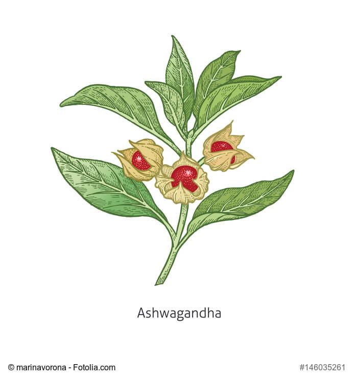 ASHWAGANDHA_natur-heilmittel