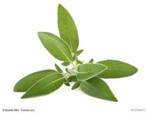 SALBEI_natur-heilmittel