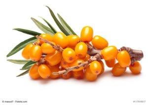 SANDDORN_natur-heilmittel