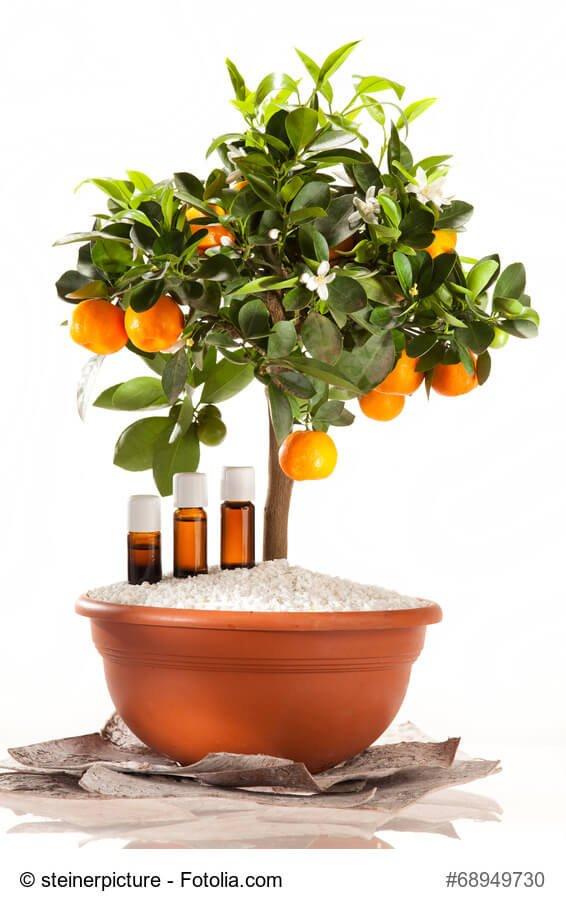 orangenbaum-mit-oel